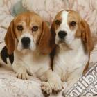 Coppia di beagle puzzle